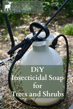 This insecticidal soap spray can be made at home for only a few dollars. It kills garden pests by coating their bodies with oil. Since insects breathe through their skin, it smothers them. Then the oil stays on the leaves making them inhospitable to further predation. But it won't harm pets or humans. Avoid spraying on fruit shrubs with open flowers and pollinators at work. This can be used on fruit trees, shrubs, canes, and vines. Avoid spraying on the vegetable garden, as the oil w...