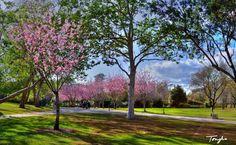 Springtime in Huntington Beach, CA Central Park