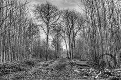 Cromer Wood, Sittingbourne, trees