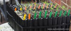 For the last few years I have used Deep Rootrainers to grow the sweet pea plants for my Sweet Pea Trials. I had been happy with the results that I had achieved using Deep Rootrainers from Haxnicks, but last year I decided to trial Deep… Container Gardening, Gardening Tips, Sweet Pea Plant, Growing Vegetables In Containers, Growing Tomatoes, Growing Flowers, Propagation, Balcony Garden, Flower Seeds