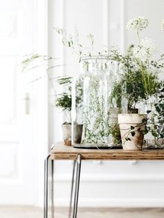 Indoor plants are a must for any workspace
