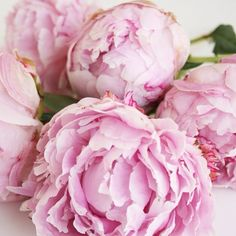 tigreh:  inspiration-guide:  peonies  checking out EVERYONE♡