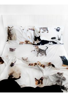 Cats are the best! We don't even have a single cat right now, but I'm still a cat lady a heart. Have a refreshing sleep with these creative sheets and duvets. Double Bed Sheets, Bed Sheet Sets, Crazy Cat Lady, Crazy Cats, Queen Bed Sheets, Cat Decor, Bedroom Themes, Bedrooms, New Room