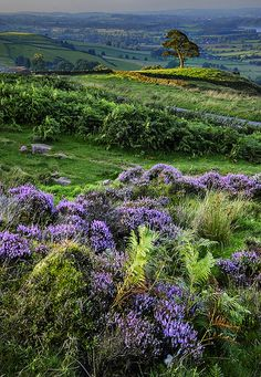 The Roaches! The Roaches is the name given to a prominent rocky ridge situated above Leek and Tittesworth Reservoir in the Peak District of England. The ridge with its spectacular rock formations rises steeply to 1,657 ft. (V)