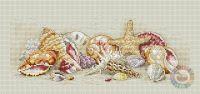 Ocean - seashells