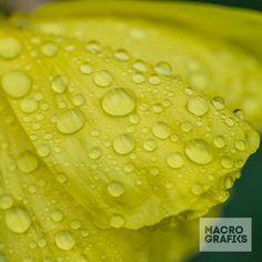 Wet Primrose/ © Ian Grainger Nature Images, Fruit, Food, Essen, Meals, Yemek, Eten