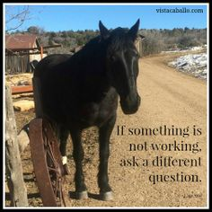 Question #curiosity #horses #selfdiscovery #courage #PersonalEvolution  #thoughts #thinking #thoughtlife #mind  #belief #beliefs #Innovation #Leadership #PersonalDevelopment #Emotions