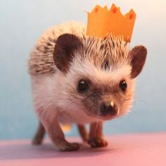 "clipppppp: "" 30 Lucrative Occupations For Hedgehogs """