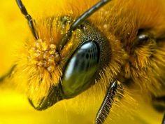 شہد کی مکھی کی نظر ہمارے سابقہ تصورات سے کہیں زیادہ تیز ہوتی ہے