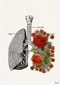 Lungs with roses Print A4 Wall art Human anatomy print by PRRINT