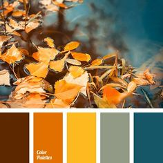 42 Ideas For Chocolate Color Palette Shades Orange Color Palettes, Color Schemes Colour Palettes, House Color Schemes, Fall Color Palette, Color Palate, House Colors, Turquoise Color Palettes, Orange Color Schemes, Color Combinations