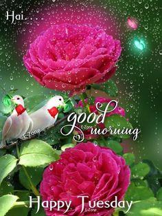 Good Morning Tuesday, Happy Tuesday, Good Morning Beautiful Images, Christmas Ornaments, Holiday Decor, Christmas Jewelry, Christmas Decorations, Christmas Decor