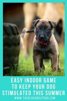 Keep Your Dog Stimulated this Summer! Dog Exercise is important Dog Training Harness, Dog Training Tips, Dog Harness, Brain Training, Boredom Busters, Dog Boredom, Dog Games, Summer Dog, Animals
