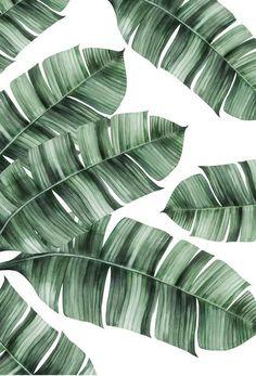 Tropical No. 8 als Premium Poster von typealive & JUNIQE Tropical No. 8 als Premium Poster von typealive & JUNIQE The post Tropical No. 8 als Premium Poster von typealive Tropical Art, Tropical Vibes, Tropical Leaves, Image Tumblr, Decoration Photo, Travellers Palm, Theme Nature, Plant Art, Art Mural