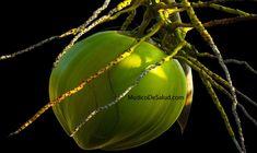 ¿Cuáles son los beneficios del vinagre de coco?