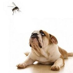 L'arrivo della bella stagione, con primavere e autunni sempre più caldi,  favoriscono la persistenza nell'ambiente di vecchie e nuove specie di zanzare che possono trasmettere malattie rischiose per cani e gatti