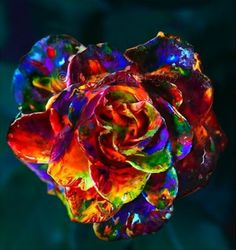 Rosa de colores.