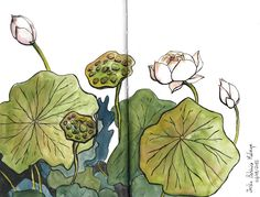 un lote de lotos