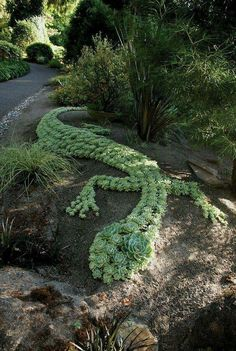 Container Gardening Ideas - The succulent garden design is appropriate for warm, temperate and even cold season locations. In cold climates, it is not always possible to have a succulent garden outside, but you can grow them … Succulent Gardening, Cacti And Succulents, Planting Succulents, Container Gardening, Planting Flowers, Organic Gardening, Succulent Ideas, Gardening Tips, Propagate Succulents