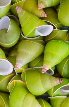 Wow!!! Bebe'!!! Love these chartreuse green and yellow sea shells!!!