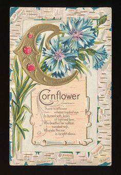 """Nash Flower Alphabet """"C """" Cornflower Greeting Postcard-mmm-2"""