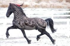 Creative grooming Friesian How awesome is this? All The Pretty Horses, Beautiful Horses, Animals Beautiful, Cute Animals, Beautiful Body, Horse Clipping, Creative Grooming, Horse Costumes, Horse Grooming