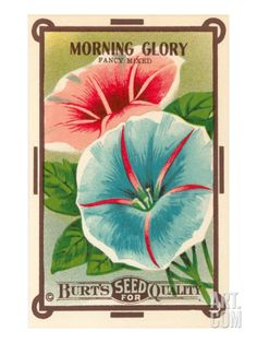 Morning Glory Seed Packet Giclee Print at Art.com