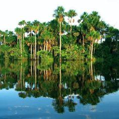 Sandoval Lake, Puerto Maldonado. Amazonian Basin, Peru.