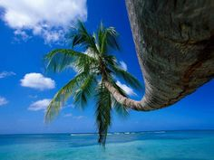 New Wonderful Photos: Palm Tree Palmiers, Tree Wallpaper, Nature Wallpaper, Photos Voyages, Tropical Paradise, Beautiful Beaches, Beautiful Landscapes, Beautiful World, Wonders Of The World