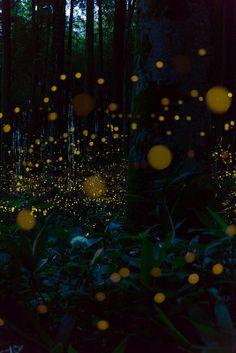 杜の妖精 Beautiful Gardens, Enchanted, Beautiful Places, Tumblr, Lights, Landscape, Nature, Pictures, Photography