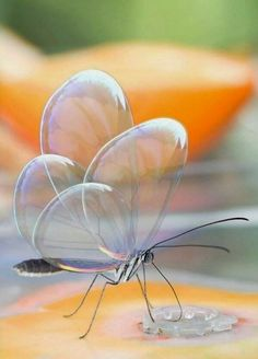 Mesmerizing Transparent Butterflies Photography