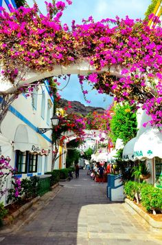 Colourful flowers in Gran Canaria. Read where to stay on The Culture Trip.