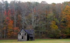 Old-House-and-Black-Walnut-Tree-in-Pleasant-Valley-Gaddistown-Union-County-Georgia.