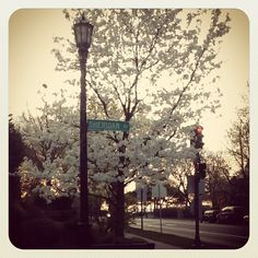 The blooming trees in #Evanston are amazing this Evanston Newbie!