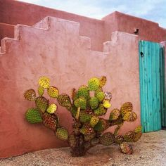 Rainbow006 : cactus next to rust-colored wall and turquoise door