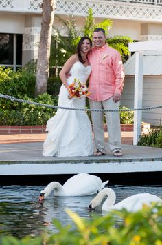 What other wedding venue do you have Swans swimming be than the #Tradewinds. http://celebrationsoftampabay.com/photographers-st-pete-beach/