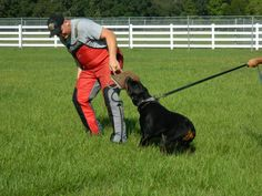 dog training 130 dog training tips Check out the information here ; http://www.wickedsavingsdaily.com/petiner-advanced-no-bark-dog-training-electric-shock-control-collar/