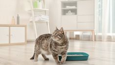 Here are seven tips that can help you and your cat keep the litter in the litter box where it belongs. Cat Finder, Pet Supplies Plus, Small Kittens, Cat Toilet, Kitten Photos, Long Haired Cats, Kitten For Sale, Pet News, Litter Box