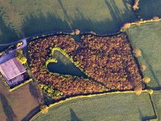 A giant heart formed with 6000 oak trees which Winston Howes planted in memory of his late wife Janet.