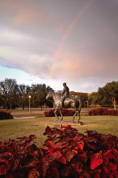 Will Rogers and Soapsuds Statue, Texas Tech University, Lubbock, TX