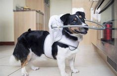 For blind dogs...