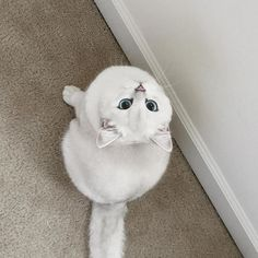 They said I could be anything, so I became a snowball.  Coby the cat