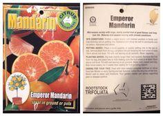Fruit tree- emperor mandarin