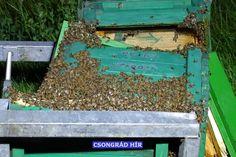 Méhkaptárak borultak az M5-ös autópályára, amikor két teherautó ütközött össze Kecskemét határában az éjszaka Keto
