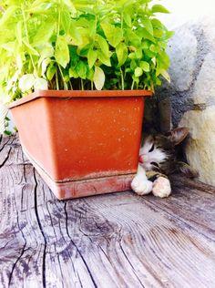 nessuno mi vede... www.borgosanmartino.eu