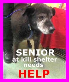 REMBRANDT - ID#A613192 (available 1/2) I am a neutered male, black Labrador Retriever mix. The shelter staff think I am about 10 years old. I have been at the shelter since Dec 26, 2014. call: San Bernardino County - Devore Shelter at (909) 386-9820 https://www.facebook.com/118795328205474/photos/pb.118795328205474.-2207520000.1419876844./755958394489161/?type=3&theater