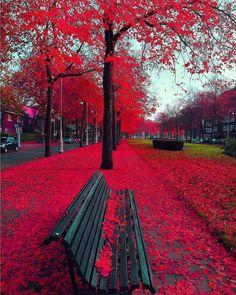 Autumn In Amsterdam 🍂🍁🌺 Beautiful photo! Beautiful World, Beautiful Places, Beautiful Pictures, Amazing Places, Wonderful Places, Beautiful Gorgeous, Amazing Photos, Photos Amsterdam, Amsterdam Fashion