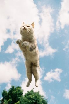 see, I can fly