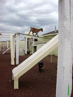 Goat Playground 8x10 Matted Photo by erindonnellyellis on Etsy, $75.00