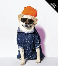 The American Beagle Outfitters Look Book Is a Dog Lover's Dream Cute Puppies, Cute Dogs, American Beagle, Dog Line, Cute Dog Clothes, Animal Projects, Dog Costumes, Mans Best Friend, I Love Dogs
